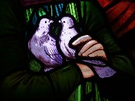 two purple doves